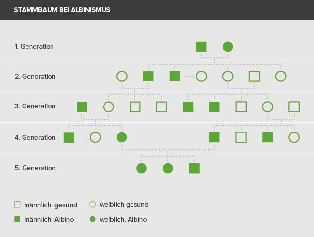 Stammbaum des Albinismus
