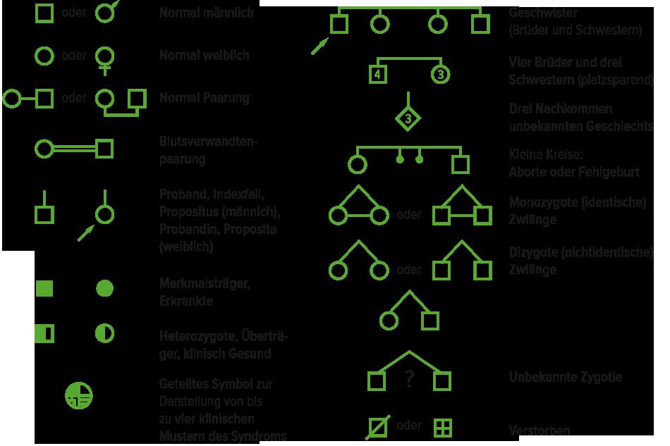 Stammbaumsymbolik