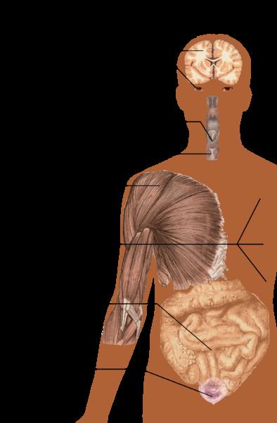 Symptome der Multiplen Sklerose