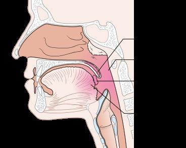 Teil des Oropharynx