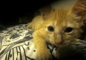 das ist das bild einer katze nach einem epileptischen anfall