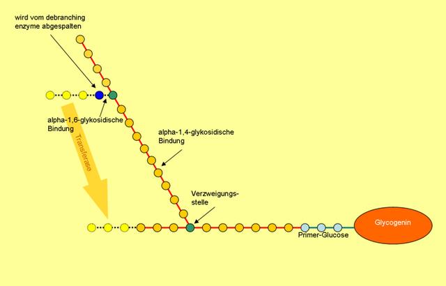 das ist eine darstellung der struktur von glykogen