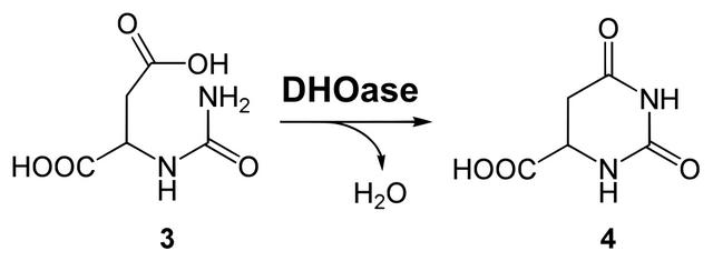 diese abbildung zeigt die synthese von dihydroorotat