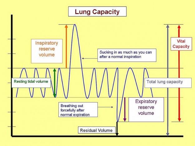 lungenkapazität