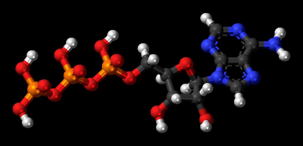 räumliche Struktur ATP