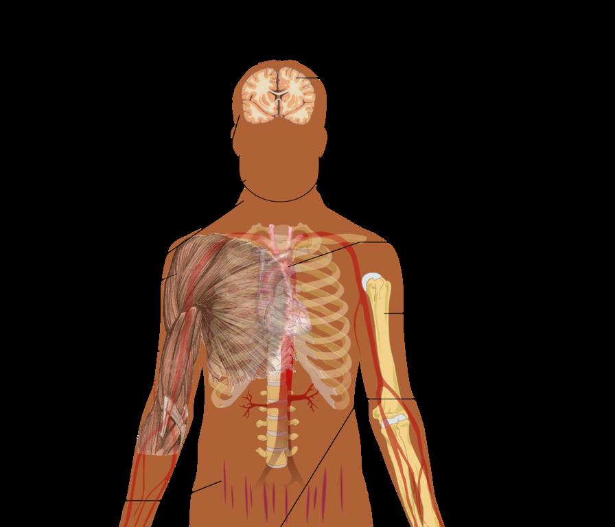 Cushing Syndrom Hyperkortisolismus Diagnose Undtherapie