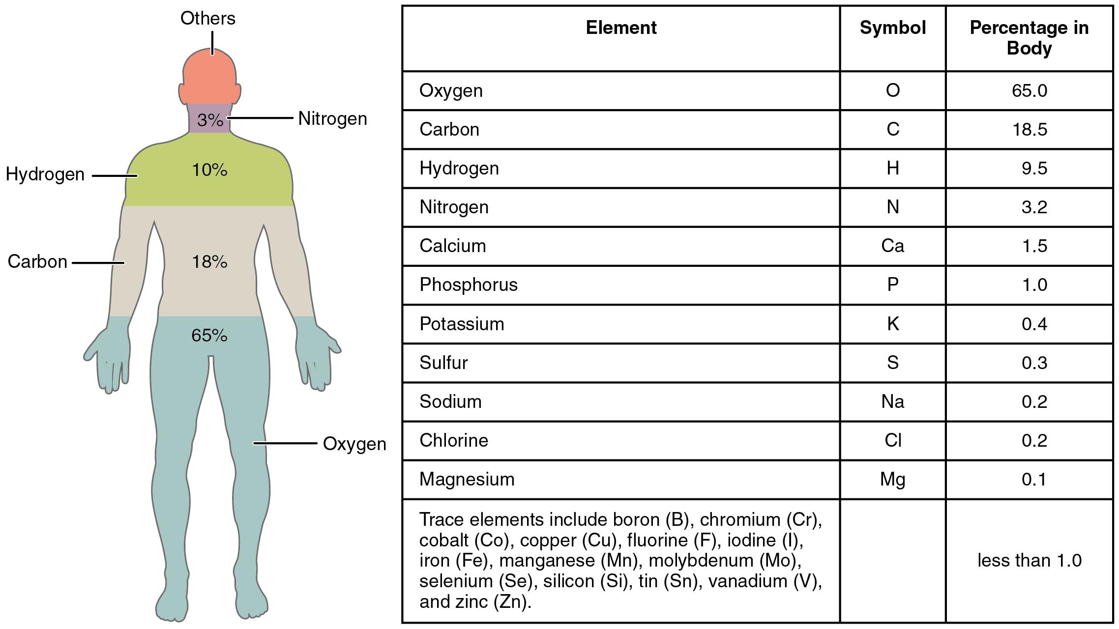 Elemente des menschlichen Körpers