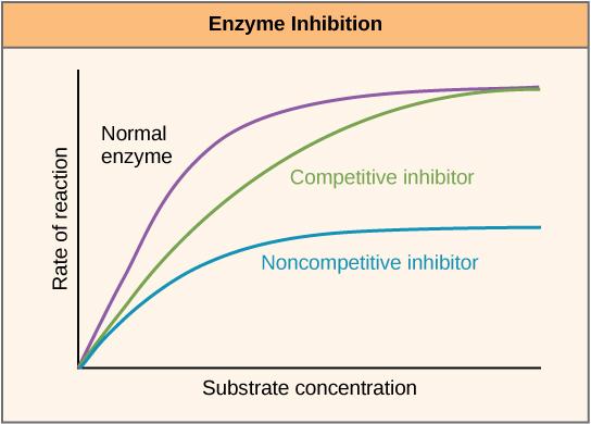 Inhibition von Enzymen
