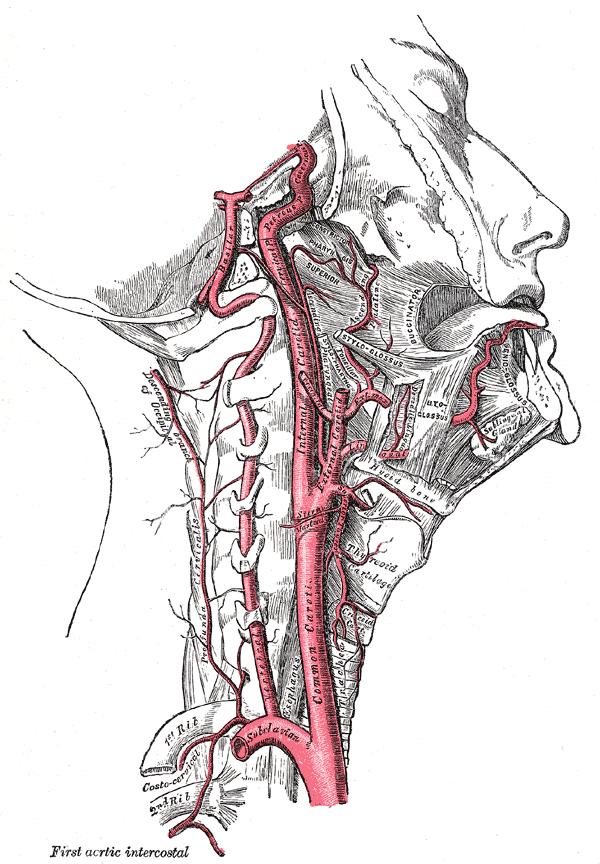 Hirninfarkt (Ischämischer Schlaganfall) – Pathophysiologisches ...