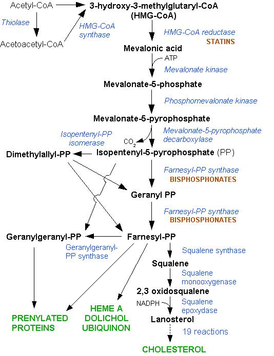 diese abbildung zeigt die einzelnen schritte der cholesterinbiosynthese