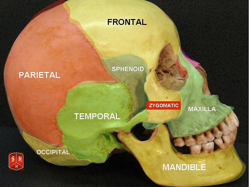 Schädelknochen: Anatomie des Schädels, Aufbau & Funktionen