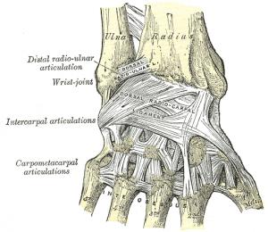Hand-baender-posterior