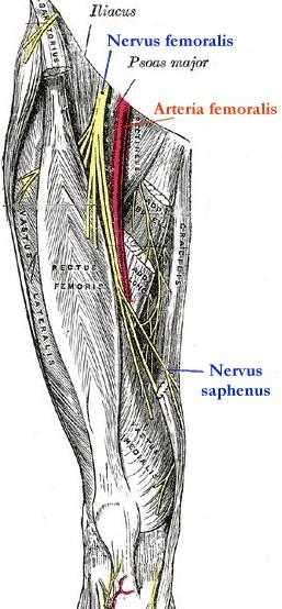 Nervus femoralis Läsionen: Symptome, Diagnostik & Therapie