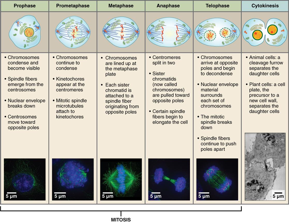 Tumormarker Im Blut Ein Alarmsignal Des Organismus