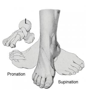 Supination und Pronation des Fußes