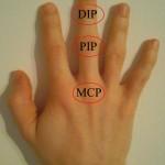 fingergelenke-der-hand