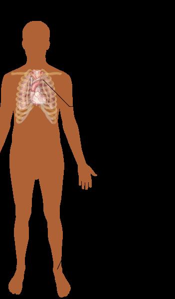 Symptome COPD