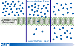 schema-diffusion-zellmembran