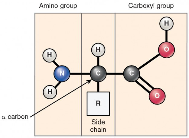 struktur aminosäure