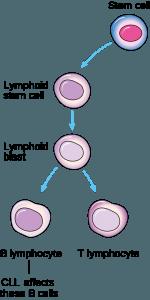Von CLL betroffene Zellen