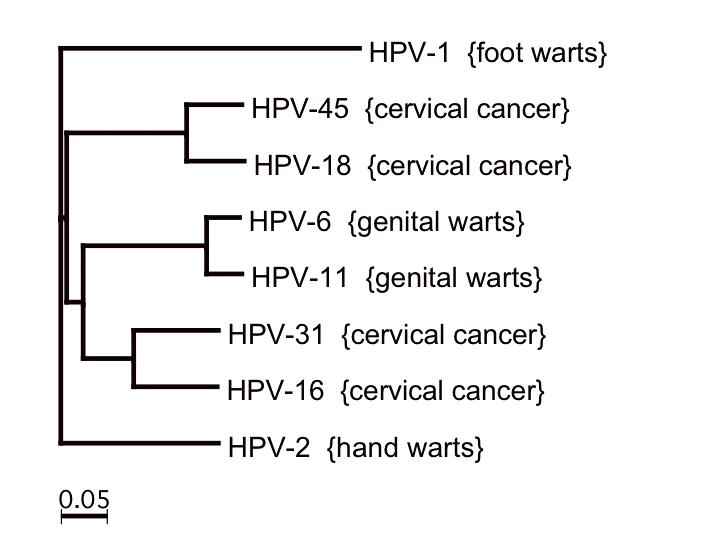 papillomavírus hpv 31