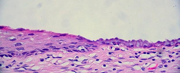 normale-zervix