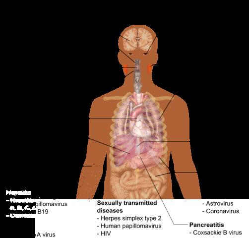 Virale Infektionen
