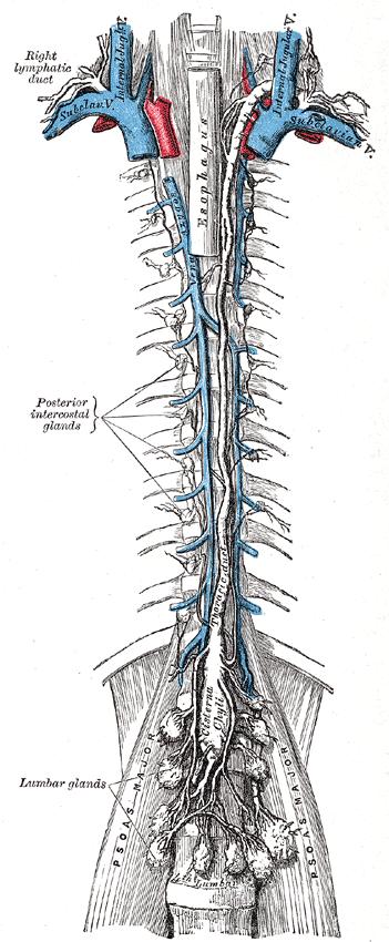 Kopf-Hals-Anatomie: Lymphgefäße und -abfluss und Ganglien