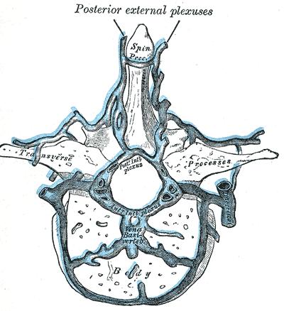 Anatomie des Zentralen Nervensystems: Gefäße und Blutversorgung