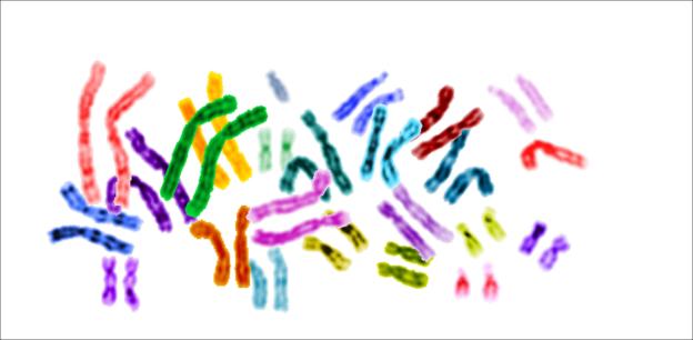 Karyotype color chromosomes white background