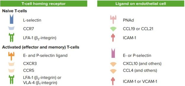 T-cell-Homing-Receptors