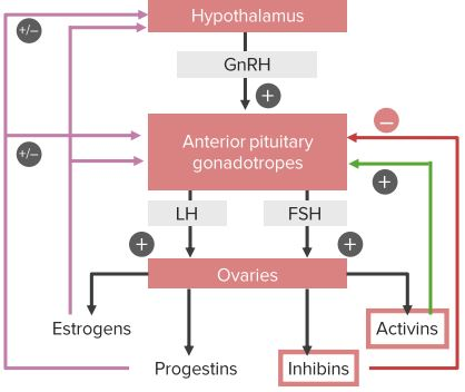 Hypothalamic-Pituitary-Ovarian-Axis