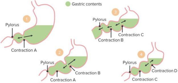 Gastric-Motility