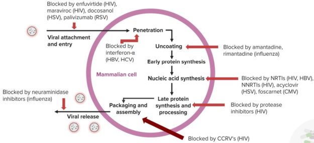 An-Overview-of-Antiviral-Activity