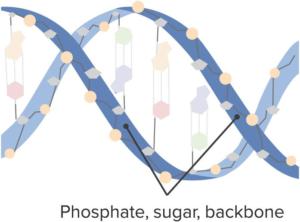 Phosphate-Sugar-Backbones