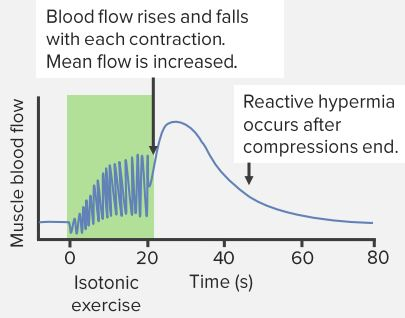 Isotonic-Resistance-Exercise