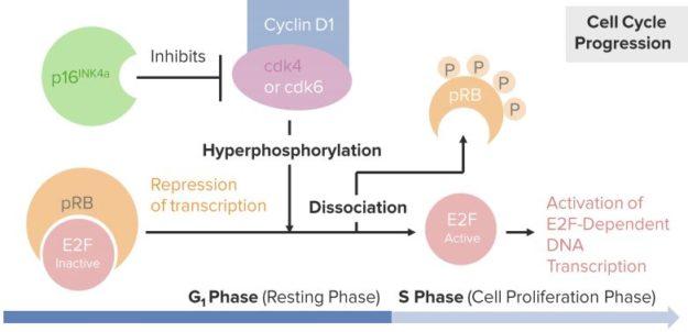 Retinoblastoma.-Molecular-Pathology