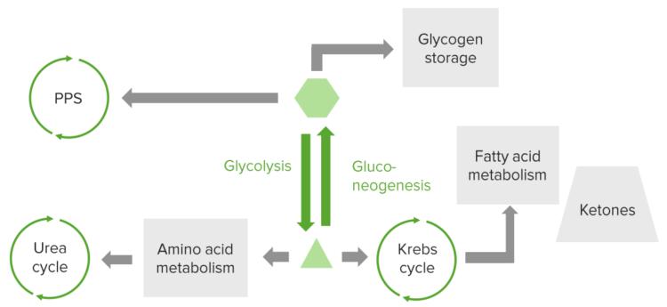 metabolic-pathways
