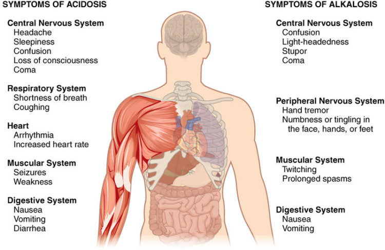 Symptoms of Acidosis and Alkalosis