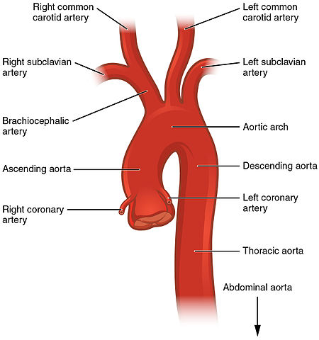 Subclavian Arteries | The Lecturio Medical Online Library