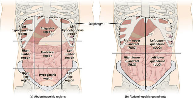 Abdominal Quadrant Regions pain assessment