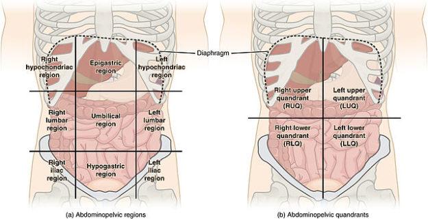 Abdominal Quadrant Regions pain assessment