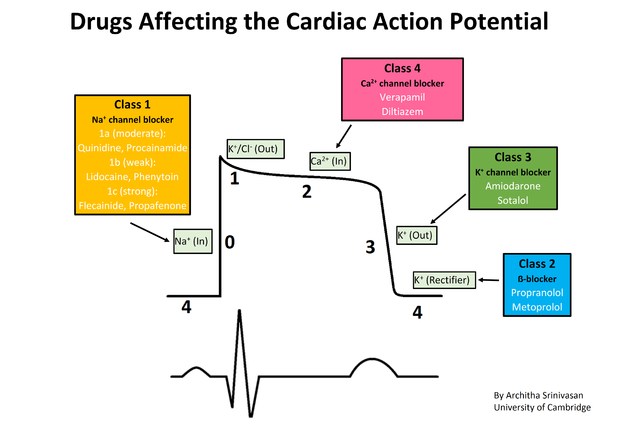 Cardiac_action_potential