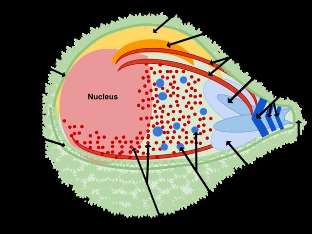 a leishmania paraziták biológiája)