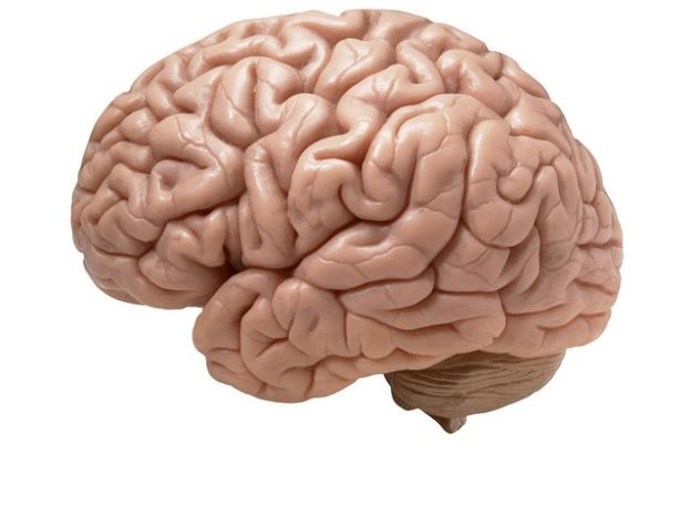 Brain with white background