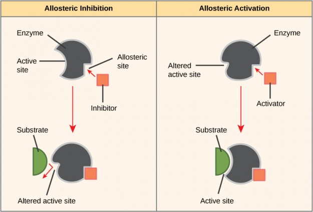 Allosteric Effects