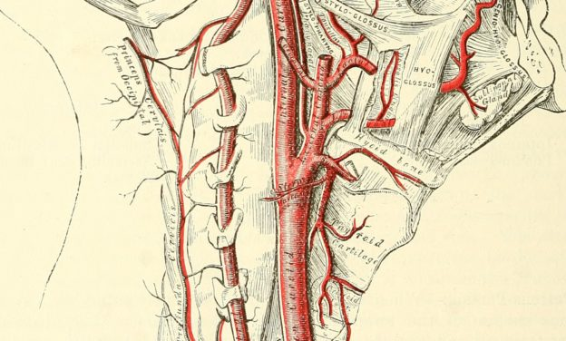 Anatomy of the head and neck, descriptive and surgical