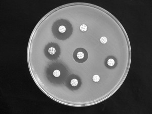 Antibiotic susceptibility testing by disk diffusion