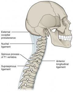 Ligaments of Vertebral Column
