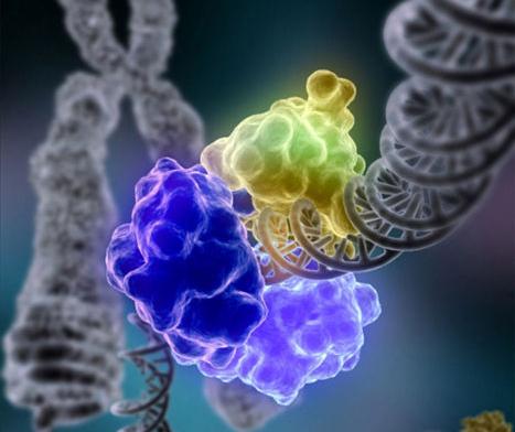 BU-Bio7-cell-cycle